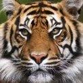 Tiger777